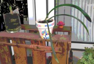 zwei Blumentöpfe auf einer Holzkiste vor einem Fenster. Der linke Blumentopf ist aus Glas. Man sieht Erde und Sand und ein Blatt spitz emportreiben. Der rechte Blumentopf ist weiß mit einem bunten Muster. Man sieht drei schmale lange Keimblätter, die im Bogen aus dem Topf hervorragen.